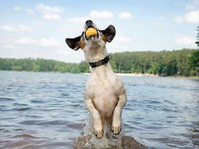 Yellow Zogoflex Durable Ball Dog by