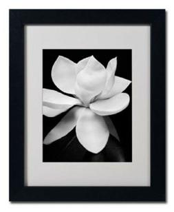 Trademark Global Magnolia by Michael Harrison Framed Photogr